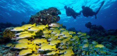 Discover Scuba Diving Kuredu Geschenke