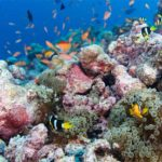 Schnorchelausflüge Kuredu Malediven