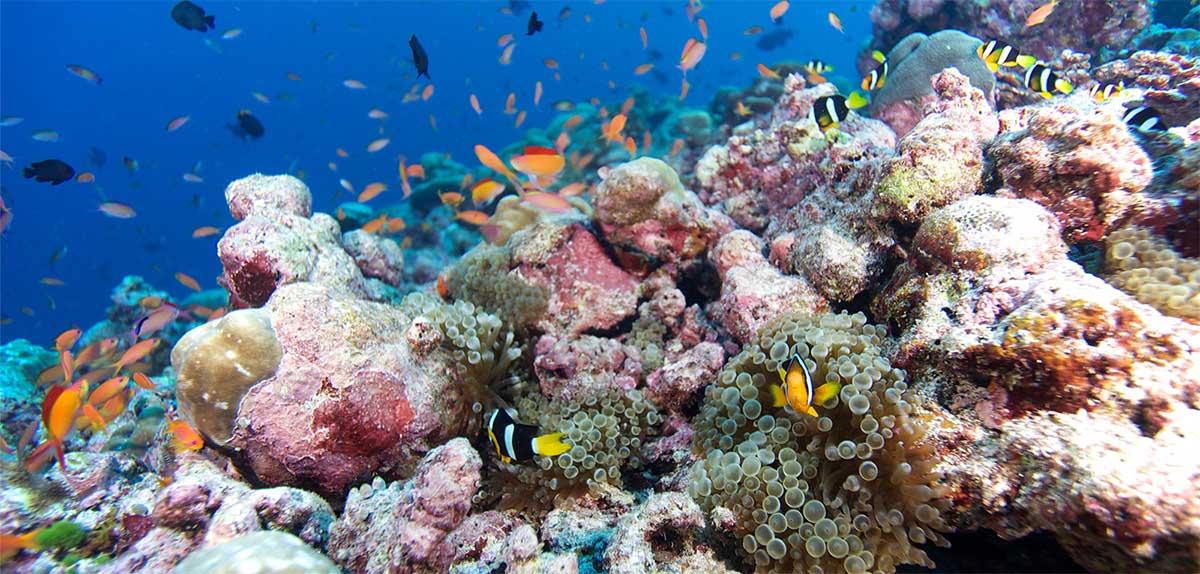 snorkelling trips Kuredu Gifts