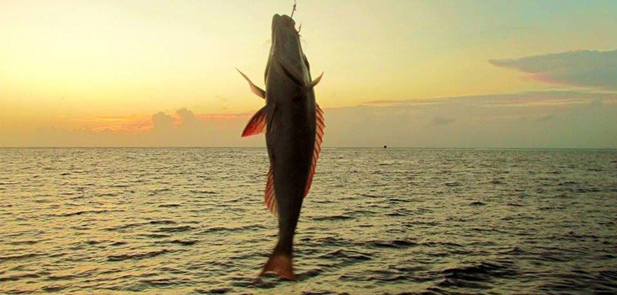 Kuredu Night Fishing Gifts